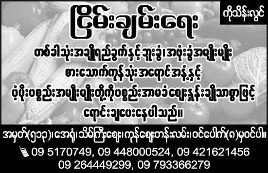 Nyein Chan Yae