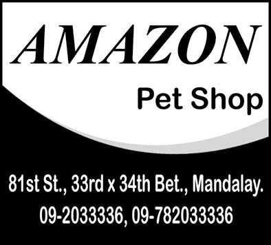 Amazon Pet Store